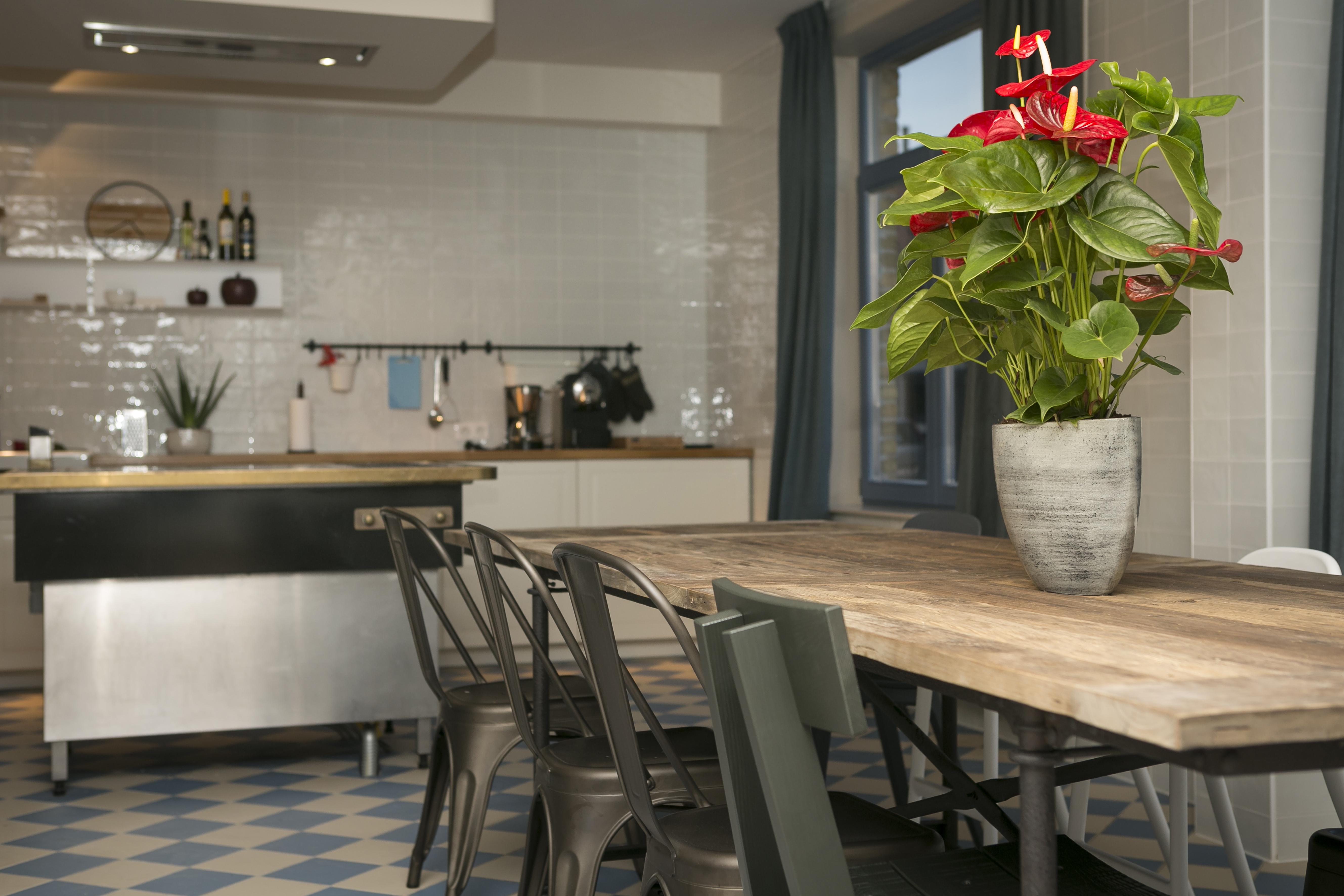 vakantiehuis te huur met ruime keuken